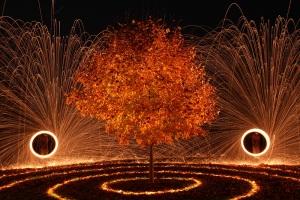 """""""Fiery Maple"""""""