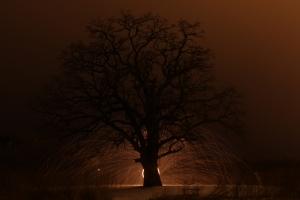 tree-of-life-1000x667